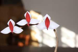 Gấp hoa lan Origami bằng giấy