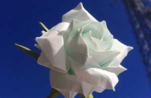 Gấp hoa hồng trắng 18 cánh Origami