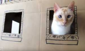 Cách làm nhà cho mèo bằng bìa cat-tong