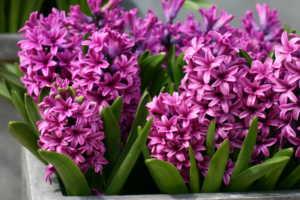 Cách làm hoa dạ lan hương bằng giấy