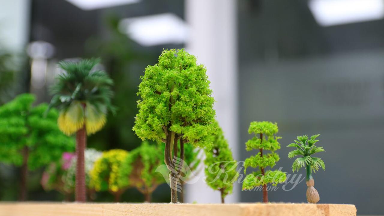 Góc phía sau của cây cổ thụ phân nhánh