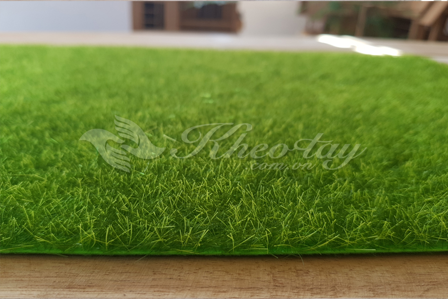 Sợi cỏ rất nhỏ, mịn. Chiều dày thảm cỏ không lớn