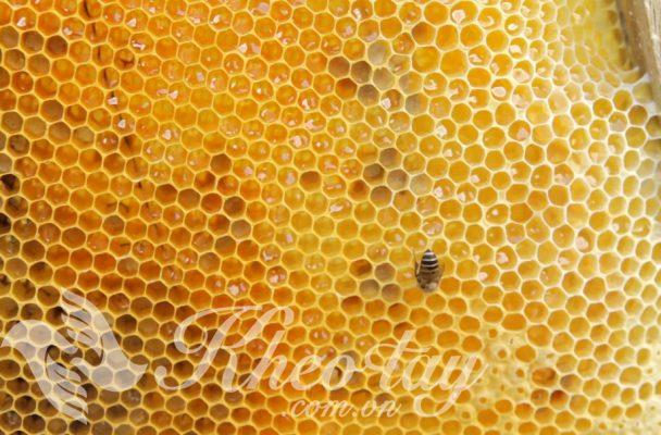100 Tác dụng của mật ong khiến bạn ngạc nhiên