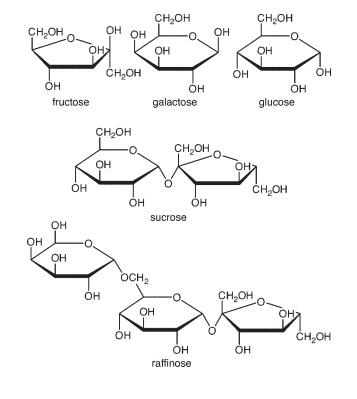 Cấu trúc một số loại đường phổ biến trong mật hoa