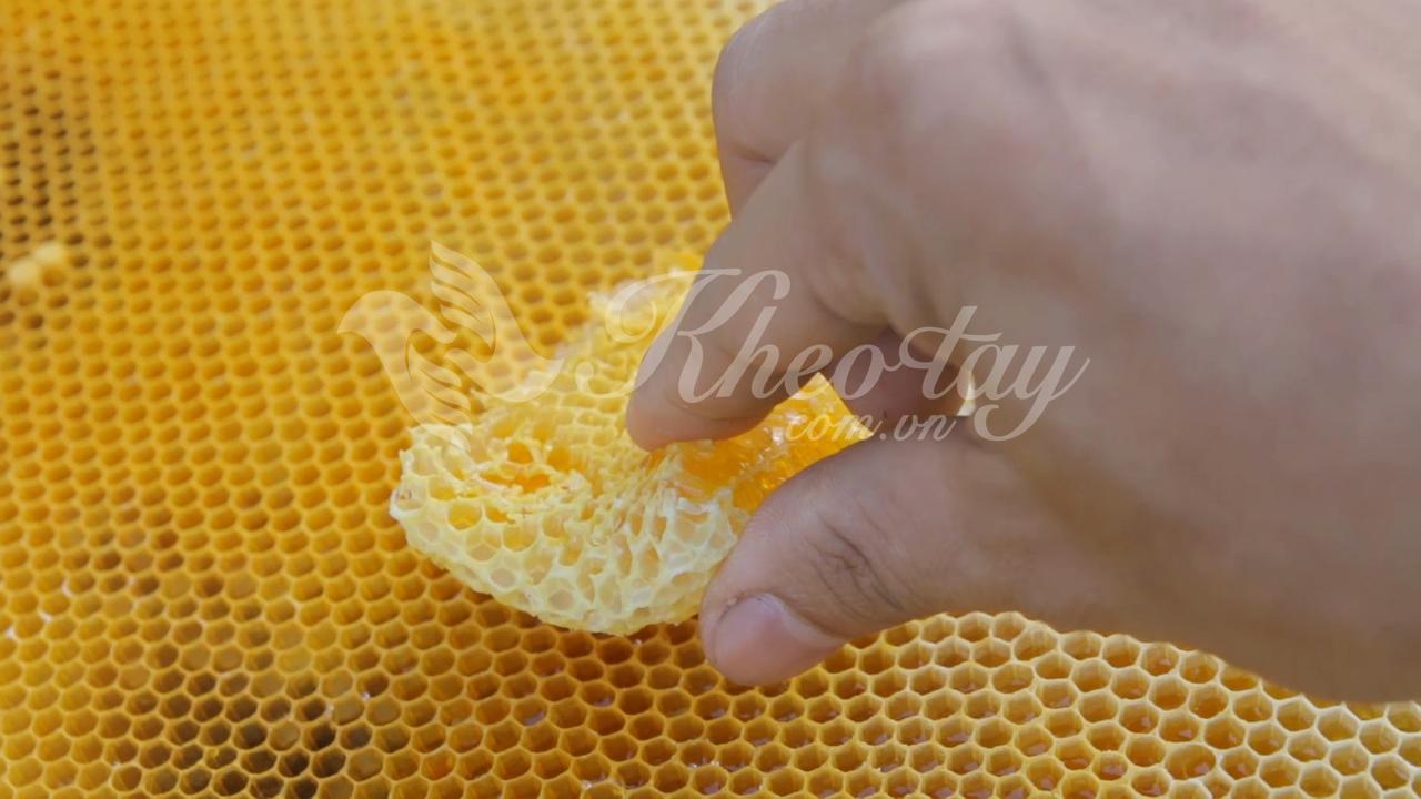 Miếng sáp ong chứa mật tại trại ong của Khéo tay